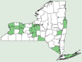 Quercus muehlenbergii NY-dist-map.png