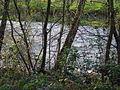 Río Ulla GDFL1.jpg