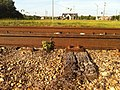 Rail laid in 1925 on low use Railroad in Alabama July 2014 - panoramio (2).jpg