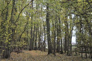 Raveley Wood nature reserve in the United Kingdom