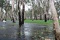Really wet (Kakadu National Park).jpg
