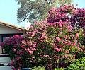 Red Bush House, Redlands, CA 7-12 (7598733696).jpg
