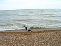 Remains of a Groyne, Normans Bay - geograph.org.uk - 176123.jpg