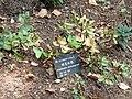 Rhododendron aberconwayi - Kunming Botanical Garden - DSC02848.JPG