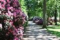 Rhododendronpark Bremen 20090513 249.JPG