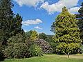 Rhododendronpark Kleine Bastei Rathen 4.JPG