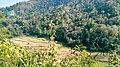 Rice terraces top view.jpg