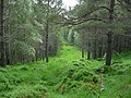 Ride through woodland - geograph.org.uk - 734890.jpg