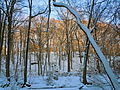 Ridley Creek winter trees.JPG