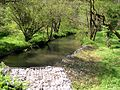 River Cynin from Country Road - geograph.org.uk - 1313952.jpg