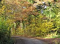 Road to Kempley passes Linton Wood - geograph.org.uk - 1042493.jpg