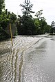 Roman Forest Flood - 4-18-16 (26486241526).jpg
