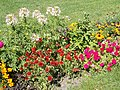 Rose Garden. Mixed flowers. Red. - Margaret Island, Budapest, Hungary.JPG