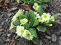Rostliny 4756.jpg
