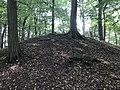Rubkow Großsteingrab Kuhbergholz (7).jpg