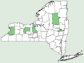 Rubus illecebrosus NY-dist-map.png