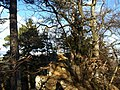 Rumpelflüe - panoramio.jpg