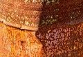 Rusty oil drum - detail.jpg