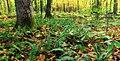 Ruth Zimmerman Natural Area (Autumn Visit) (4) (15327922959).jpg