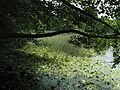 Rybník Březina (011).jpg