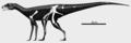 Sacisaurus skeletal.png