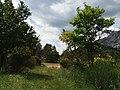 Sainte-Victoire 20180616 47.jpg