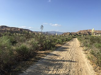 San Francisquito Canyon - San Francisquito Canyon is home to low-lying shrubs, dry grasses, and towering yucca that bloom during the spring.