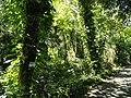 San Juan Botanical Garden - DSC07026.JPG