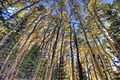 Sandia Peak (5032998115).jpg