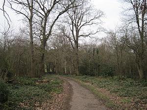 Scadbury Park - Image: Scadbury Park path