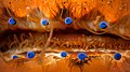 Scallop eyes2.jpg