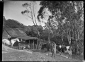 Scene at a dairy farm, 1906 ATLIB 275206.png