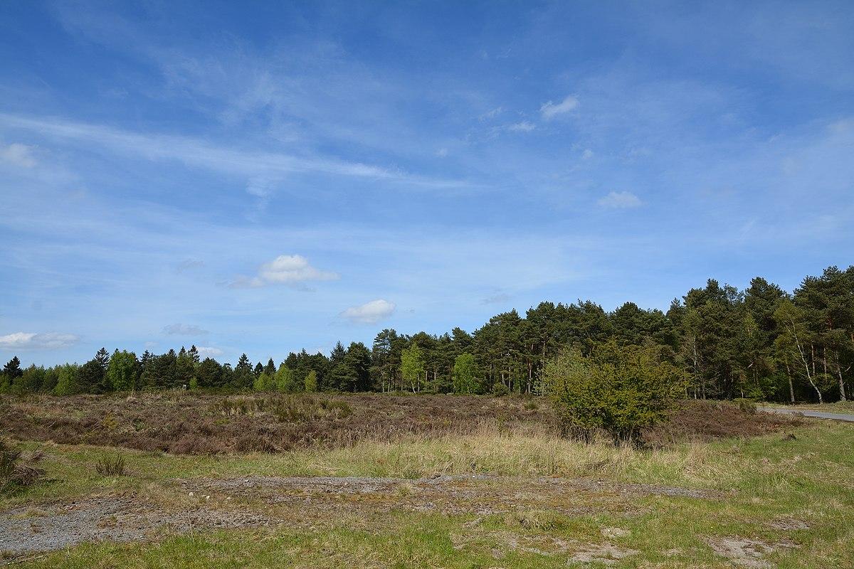 Wittenborner Heide – Wikipedia