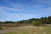 Schleswig-Holstein, Bark, Wittenborner Heide NIK 6039.jpg