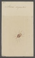 Scirus - Print - Iconographia Zoologica - Special Collections University of Amsterdam - UBAINV0274 071 06 0022.tif