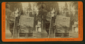 Section of the original Big Tree, 30 feet diameter, by Lawrence & Houseworth.png