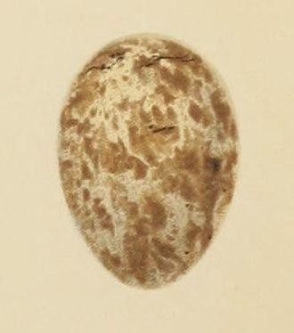 Garden warbler - Painting of an egg