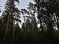 Segeberger Forst 06.jpg