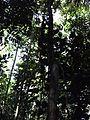 Selva - panoramio (5).jpg