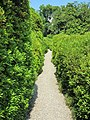 Sentiero fra le azalee.JPG
