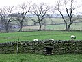Sheephole near Portgate Farm - geograph.org.uk - 629171.jpg