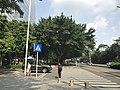 Shennan Avenue near headquarters of Tencent 1.jpg