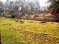 Shillong Lady Hydari zoo.jpg