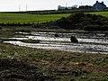 Shoreline, Ballymacormick Point (2) - geograph.org.uk - 728792.jpg