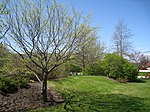Shoreway Arboretum - Southern Maine Community College, South Portland, ME - IMG 8164.JPG