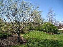 Southern maine community college wikipedia shoreway arboretumedit publicscrutiny Images