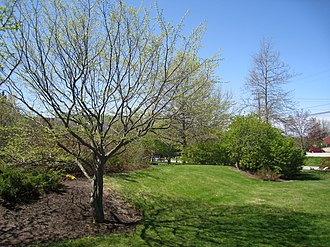 Southern Maine Community College - Shoreway Arboretum