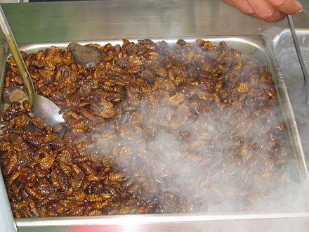 Beondegi, silkworm pupae steamed or boiled and seasoned for taste, for sale by a street vendor in South Korea Silkworm snack.jpg