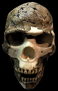 Skhul and Qafzeh hominins Hominin events for the last 10 million years