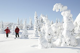 Lapland (Finland) - Image: Skiing at Riisitunturi National Park